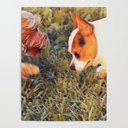 Yorkie and a Chihuahua Poster