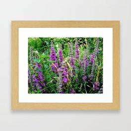 Purple Loosestrife II Framed Art Print