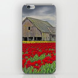 RED TULIPS AND BARN SKAGIT FLATS iPhone Skin