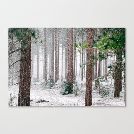 Snowy Pine trees Canvas Print