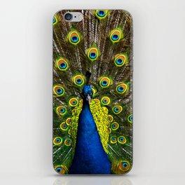 Colorful peacock iPhone Skin