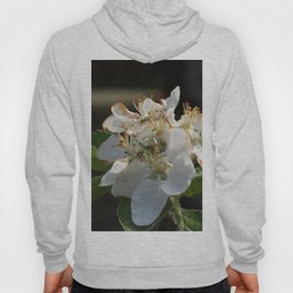 Apple tree blossom Hoody