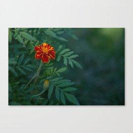 Flowers Tagetes Canvas Print
