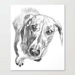 Dachshund Portrait in Black and White Canvas Print