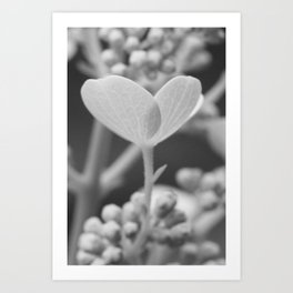 Soft Stages no. 5 Art Print