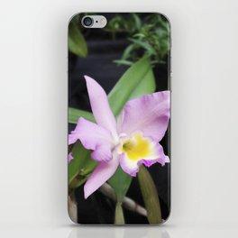 Cattleya Horace Maxima Orchid iPhone Skin