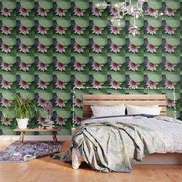 Beautiful Lotus Flower Wallpaper