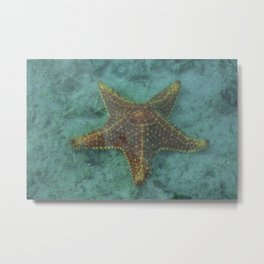 Starfish in the Lagoon Metal Print
