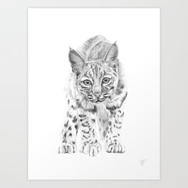 On the Prowl :: A Young Bobcat Art Print