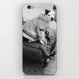 dog in a sweater iPhone Skin