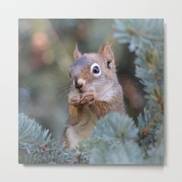 Mr. Squirrel ~ I Metal Print