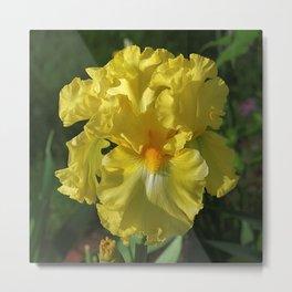 Golden Iris flower - 'Power of One' Metal Print
