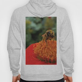Bee on Mexican Sunflower Hoody