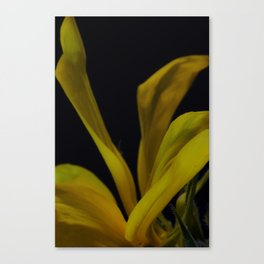 soft yellow leaves Canvas Print