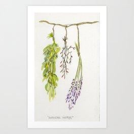Hanging Herbs  Art Print