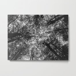 The Dark Forest Path Metal Print