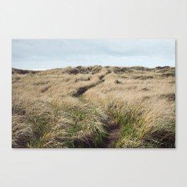 Oregon Dune Grass Adventure - Nature Photography Canvas Print