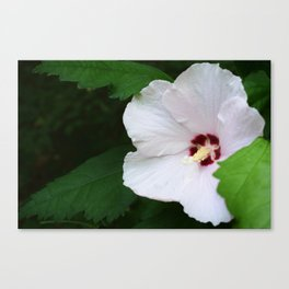 Tiny Flower, Big Beauty Canvas Print