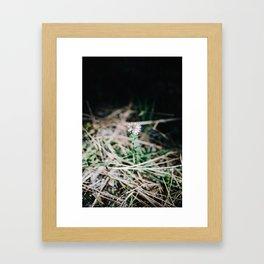 Moody Daisy Framed Art Print