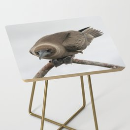 Curious young boobie Side Table