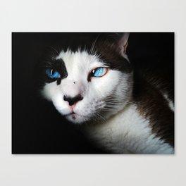 Cat siamese blue eyes Canvas Print