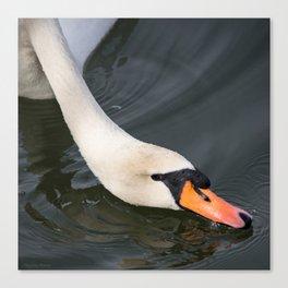 Mute Swan in Winter - Neck Skimming Canvas Print