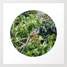 Monkey in a Tropical Jungle Circle Fine Art Print Art Print