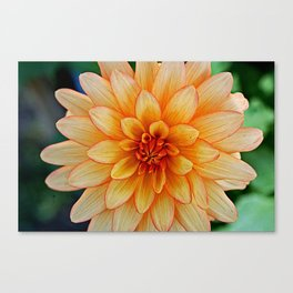 Yellow Sta Canvas Print