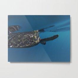 Swim In The Sea Metal Print
