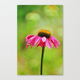 Pink Pop Coneflower Canvas Print