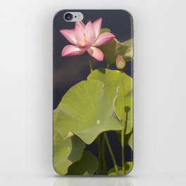 Pink Lotus by Teresa Thompson iPhone Skin
