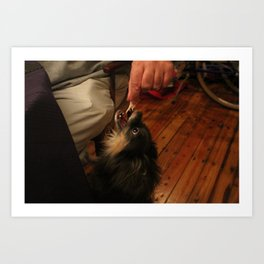 begging chihuahua Art Print