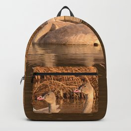Trumpeter Swan Family Backpack