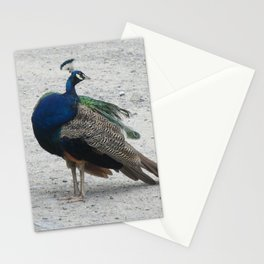 Lost Peacock Stationery Cards