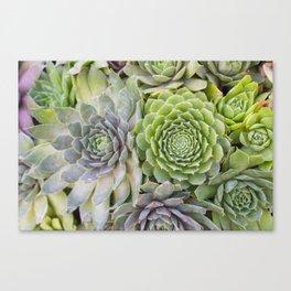 Bountiful Succulents Canvas Print