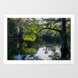 Florida river Art Print