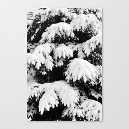 Snow Covered Fir Tree Canvas Print
