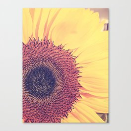 Sunday Sunflower Canvas Print