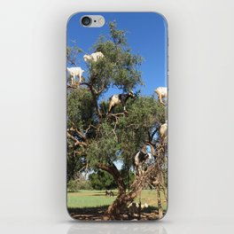 Goats in a tree iPhone Skin