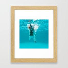 Shark Alert Framed Art Print