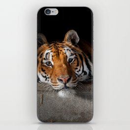 Cincinnati in His Den iPhone Skin