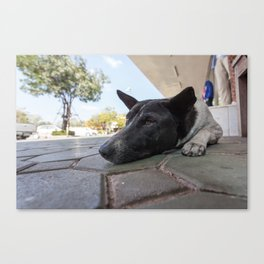 street dog Canvas Print