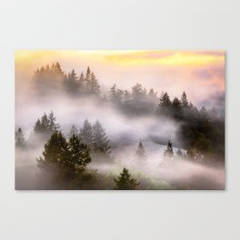 Misty Mount Tamalpais State Park Canvas Print