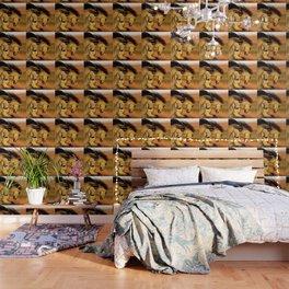 HORSES - The Buckskins Wallpaper