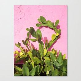 Pink Wall/Green Cactus  Canvas Print