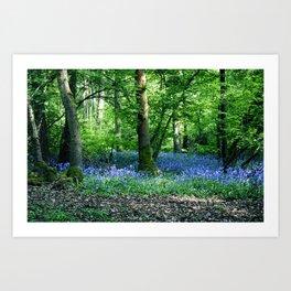 The Bluebell Dell Art Print