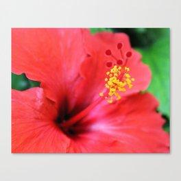 Maui Hibiscus Canvas Print