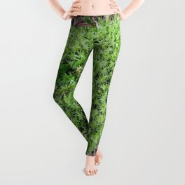 The Fairy's Futon Leggings