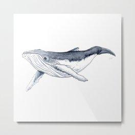 Baby humpback whale (Megaptera novaeangliae) Metal Print