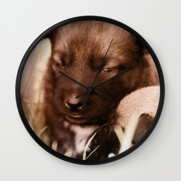 2 weeks old Dutch Shepherd puppies Wall Clock
